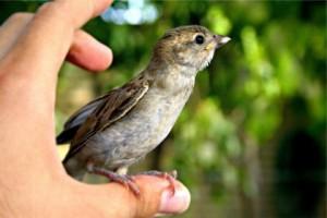poème oiseau solitaire