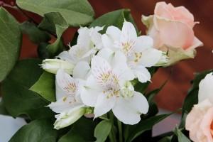 remède naturel à la fatigue du printemps