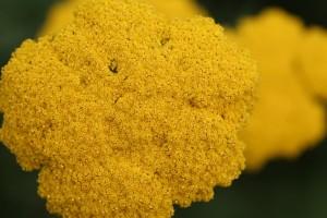 pollen et printemps
